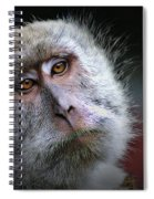 A Monkey's Look Spiral Notebook