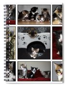 A Montage Of Kittens Spiral Notebook