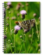 A Painted Lady Spiral Notebook