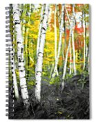 A Painting Autumn Birch Grove Spiral Notebook
