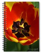 A Painting Red Tulip Spiral Notebook