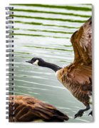 A Pair Of Canada Geese Landing On Rockland Lake Spiral Notebook
