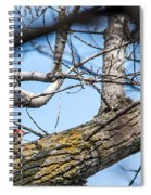 A Pair Of Red-bellied Woodpeckers Spiral Notebook