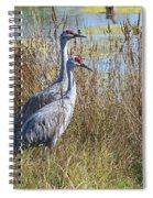 A Pair Of Sandhill Cranes Spiral Notebook