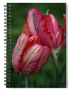 A Pair Of Tulips In The Rain Spiral Notebook