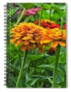 A Pair Of Yellow Zinnias 03 Spiral Notebook