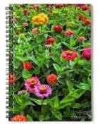 A Pair Of Yellow Zinnias 04 Spiral Notebook