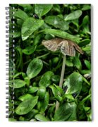 A Pat On The Head Spiral Notebook