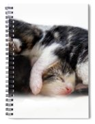 A Pile Of Pussies Spiral Notebook