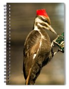 A Pileated With Intent Spiral Notebook