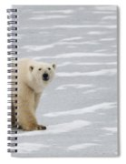 A Polar Bear On Hudson Bay Spiral Notebook