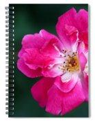 A Pretty Pink Rose Spiral Notebook