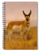 A Pronghorn Gazes Spiral Notebook