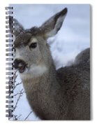 A Quick Nibble Spiral Notebook