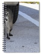 A Raccoon In Florida Spiral Notebook