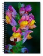 A Rainbow Flower Spiral Notebook