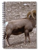 A Ram Climbing  Spiral Notebook