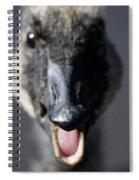 A Real Closeup Spiral Notebook