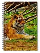 A Real Detroit Tiger Spiral Notebook