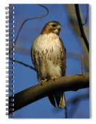 A Red Tail Hawk Spiral Notebook