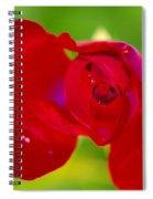 A Red Wet Rose Spiral Notebook