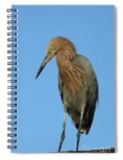 A Redhead On A Roof Spiral Notebook