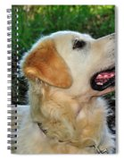 A Retriever's Loving Glance Spiral Notebook