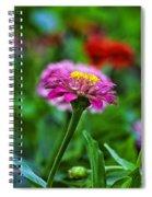 A Sea Of Zinnias 13 Spiral Notebook