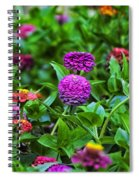 A Sea Of Zinnias 14 Spiral Notebook