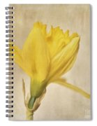 A Simple Daffodil Spiral Notebook