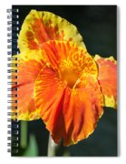 A Single Orange Lily Spiral Notebook