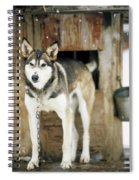 A Sled Dog Stands By Its Kennel Spiral Notebook