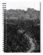 A Small Path Through Very Tall Grass Inside The Okhla Bird Sanctuary Spiral Notebook