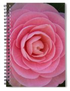 A Soft Blush Spiral Notebook