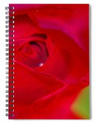 A Soft Wet Rose Spiral Notebook