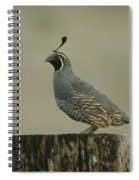 A Sole Rooster Quail Spiral Notebook