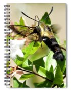 A Sphinx's Pollination Spiral Notebook
