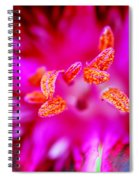 A Splash Of Colour Spiral Notebook