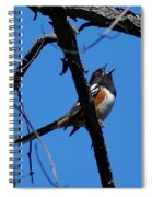 A Spotted Towhee Mid-song Spiral Notebook