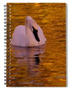 A Swan On Golden Waters Spiral Notebook