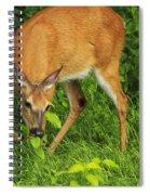 A Taste Of Nature Spiral Notebook