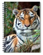 A Tigers Glance Spiral Notebook