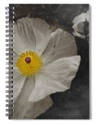 A Touch Of Color - Poppy Spiral Notebook