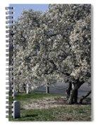 A Tree In Arlington Spiral Notebook