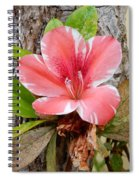 A Trees Life Spiral Notebook