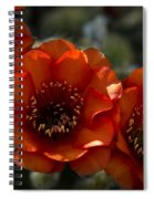 A Trio Of Red  Spiral Notebook