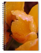 A Tullips Dappled With Rain Spiral Notebook