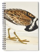 A Turnstone. Arenaria Interpres. From A Spiral Notebook