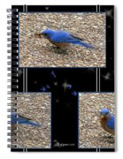 A Typical Eastern Bluebird's Lunch - Featured In Comfortable Art Group Spiral Notebook
