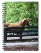 A Very Beautiful Hilton Head Island Horse Spiral Notebook